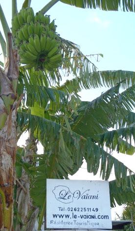 Ile de la Réunion - Le Vaïani