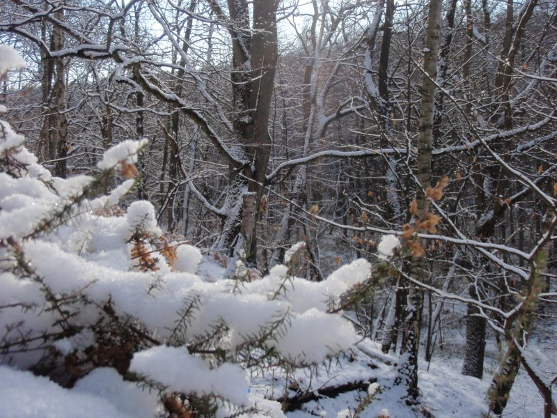 2009_01_paysage_neige_yvelines_manet_0020___800x600
