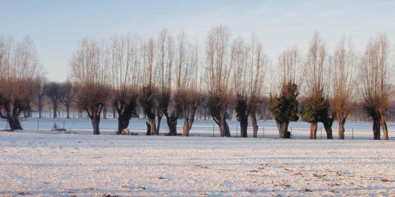 2009_01_paysage_neige_yvelines_plaisir_0006___800x600