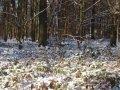 2009_01_paysage_neige_yvelines_manet_0004___800x600