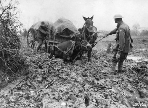 Mon_arriere_grand_pere_ce_heros_2014_chevaux-1914-2_005